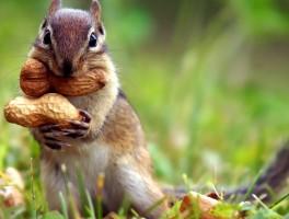 squirrel_eating_peanuts-1920x1080