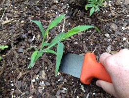 weeding-with-soil-knife-web