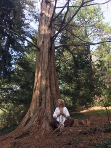 Wendy_tree