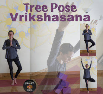April 2019 Pose of the Month: Tree Pose